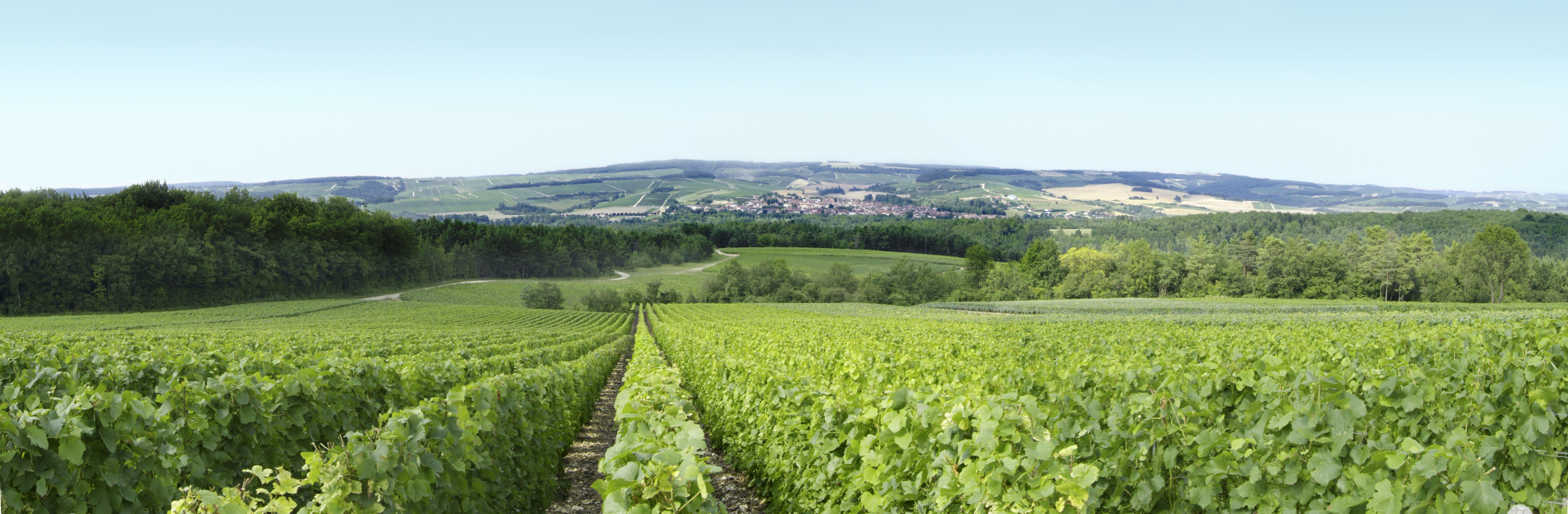 Vue panoramique depuis les vignes
